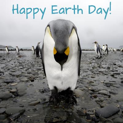 penguin_earthday
